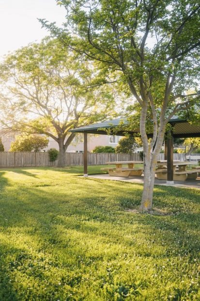 Ideas for A Backyard Makeover