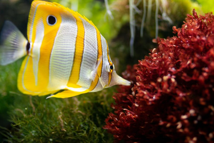 Top Three Reasons to Visit a Professional Aquarium Solution Service Today